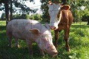 Идея 39: Отглеждане и развъждане на млекодайни животни и разнобразяване на бизнеса с други деиности