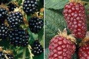Идея 44: Производство на плодови вина